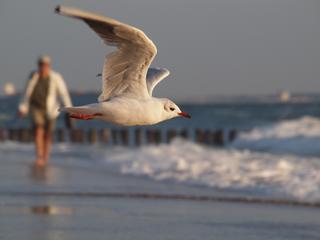 Partij biedt gedeputeerde onderzoek aan 'Genoeg gebouwd aan de kust'