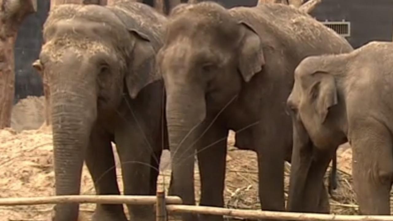 Verzorgers dierenpark Amersfoort waken hele nacht bij Indra