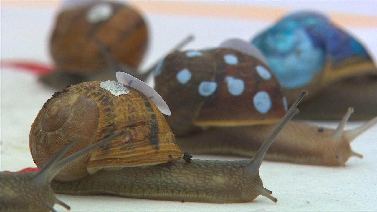 honderdvijftig-slakken-racen-tegen-elkaar-in-engeland-om-wereldtitel