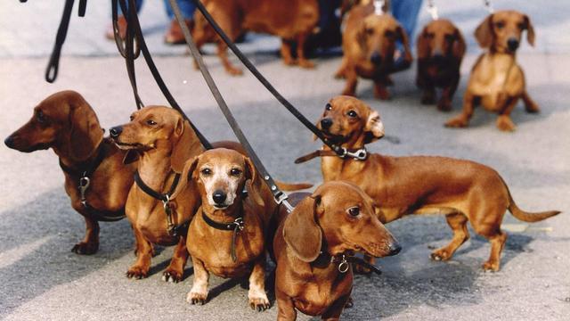 Controleurs hondenbelasting op pad in Stad