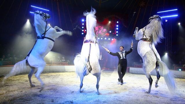 Laatste tickets Circus Louis Knie vanaf 7,50 euro