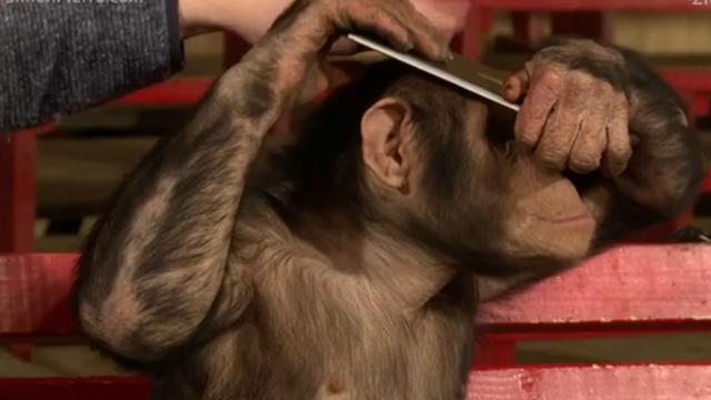 Apen totaal in de war door 'magische' iPad