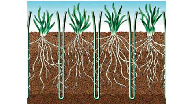 Leiden gaat experimenteren met hybride gras