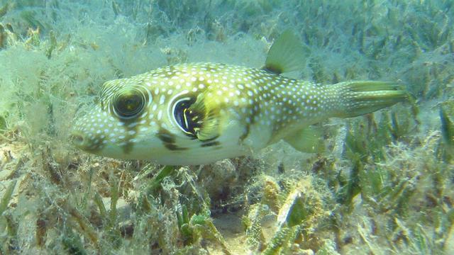 Wetenschappers waarschuwen voor verlies van zeegras