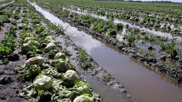 'Miljoenenstrop dreigt voor boeren door regenval'
