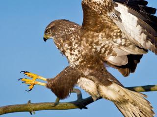 Dieren moeten apparaten met klauwen uit de lucht kunnen halen