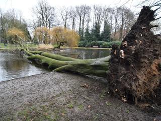 Door de krachtige windstoten is de boom ontworteld en in het water beland