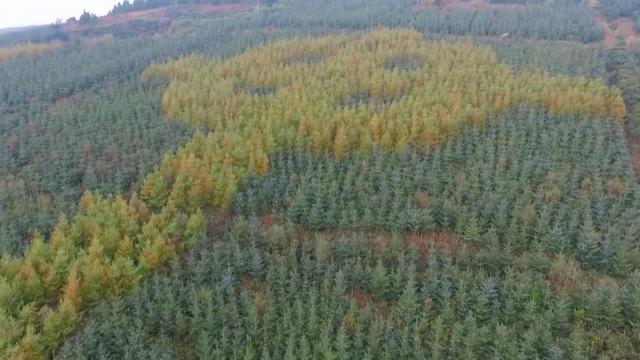 Groot Keltisch kruis ontdekt in bos in Ierland