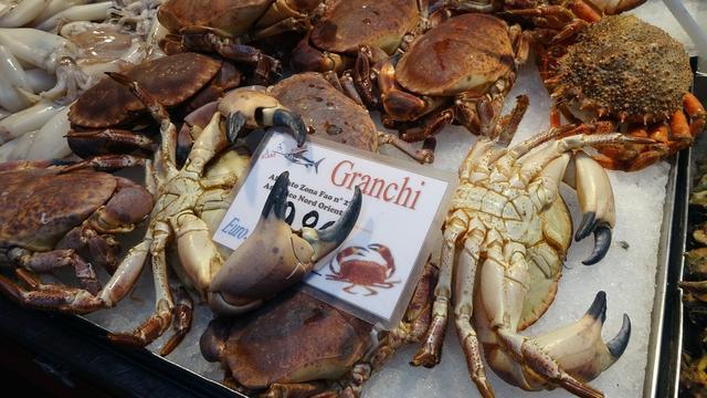 Partij van de Dieren wil verkoopverbod levende krabben