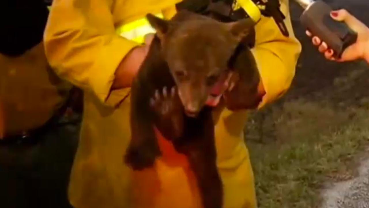 Brandweer redt babybeer uit bosbrand
