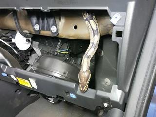 Anderhalve meter lange slang bleek eigendom van museum