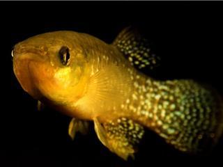 Vissen ontwikkelden weerstand binnen vijftig jaar