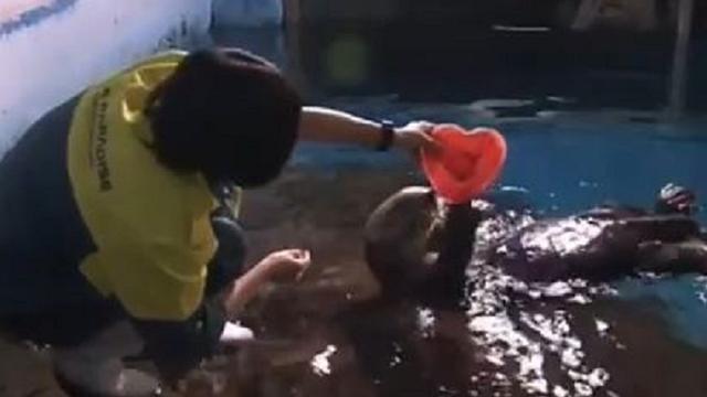 Japanse otters krijgen Valentijnsdagcadeau