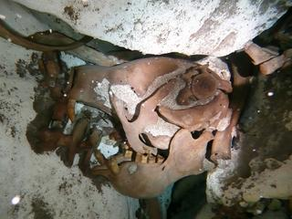 Dier viel 11.000 jaar geleden in zinkgat