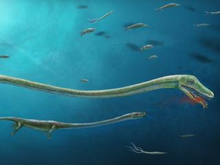 Wetenschappers dachten dat uitgestorven zeedier eieren legde