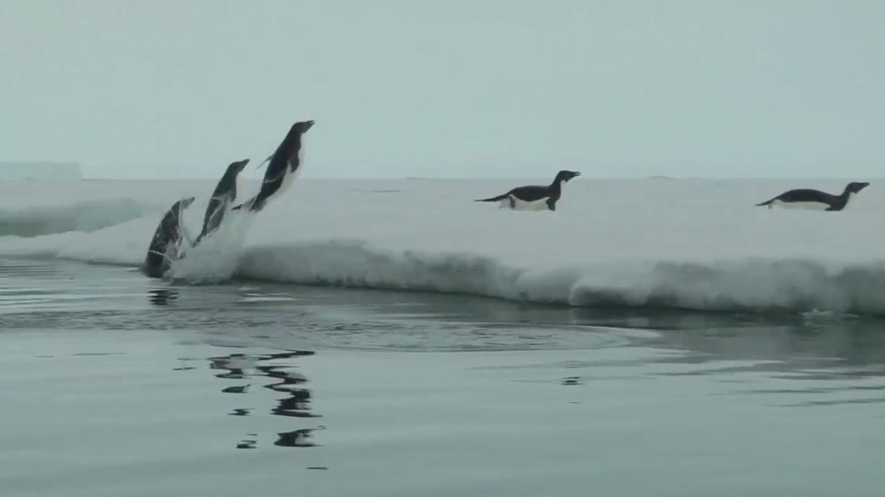 IJsberg bedreigt voortbestaan pinguïnkolonie op Antarctica