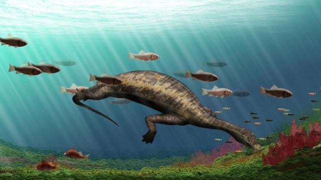 'Eerste plantenetend zeereptiel uit prehistorie ontdekt'