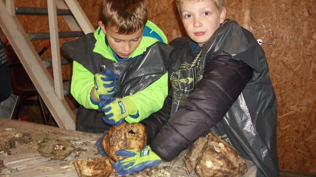 Kinderen maken lampionnen van suikerbieten in Klundert