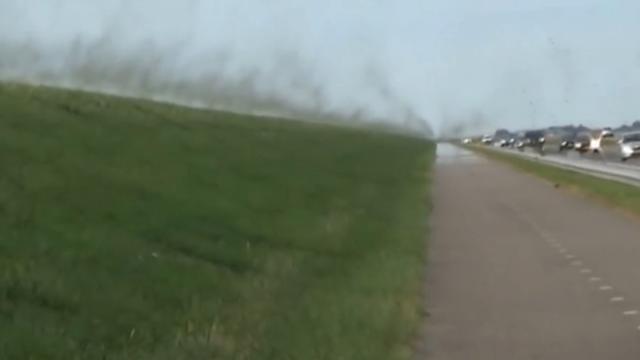Enorme zwerm muggen op de Afsluitdijk