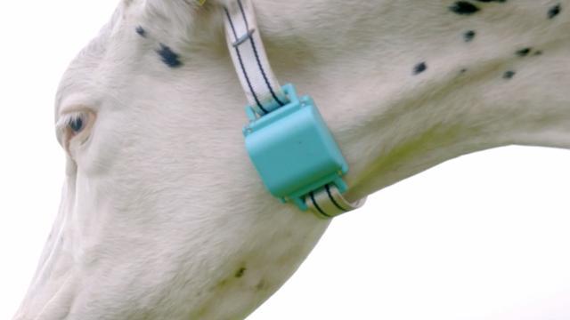Nederlandse 'Fitbit voor koeien' wint startupprijs in Dublin