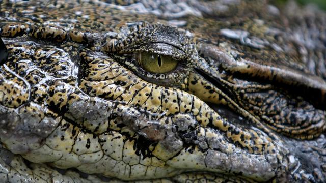 Inwoners dorpje VS zien oranje alligator rondzwemmen