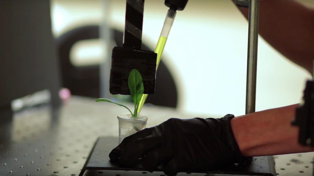 Slimme spinazieplant stuurt mailtje als hij explosieven detecteert