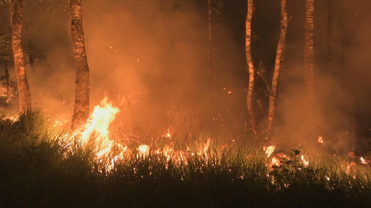 Grote bosbrand in natuurgebied Mariapeel door droogte