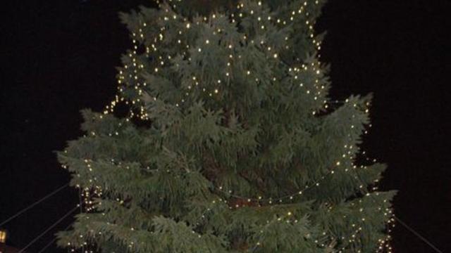 Grote kerstbomen keren terug in centrum van Leiden