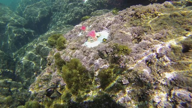 Kunstmatige algen geplaatst in Middellandse Zee