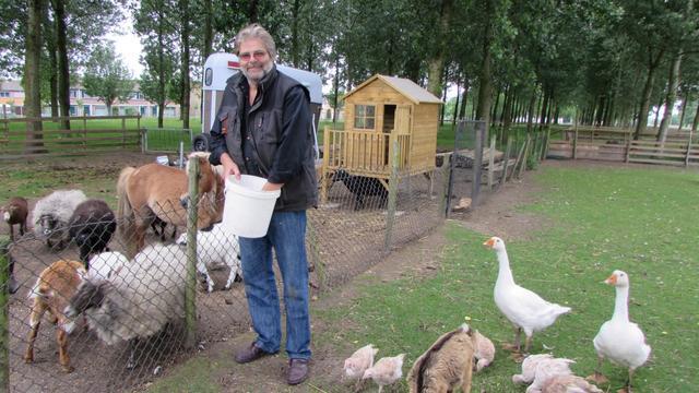 Schaapscheerfeest bij kinderboerderij in Hansweert