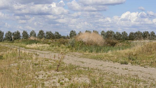 Ruim baan voor tijdelijke natuur in Zuid-Holland