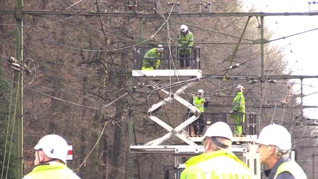 Treinverkeer Utrecht-Ede gestremd door omgevallen boom