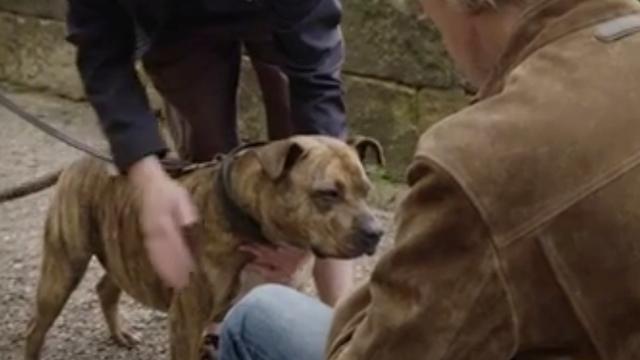'Eenzaamste hond ter wereld' krijgt rol in Transformers