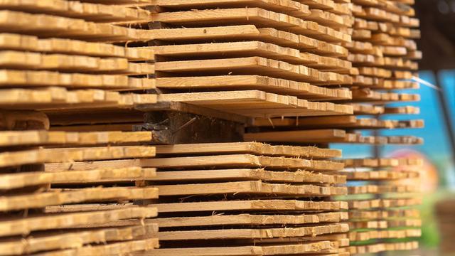 Gekapte bomen Jaarbeursplein worden gedroogd in houten huisje Croeselaan
