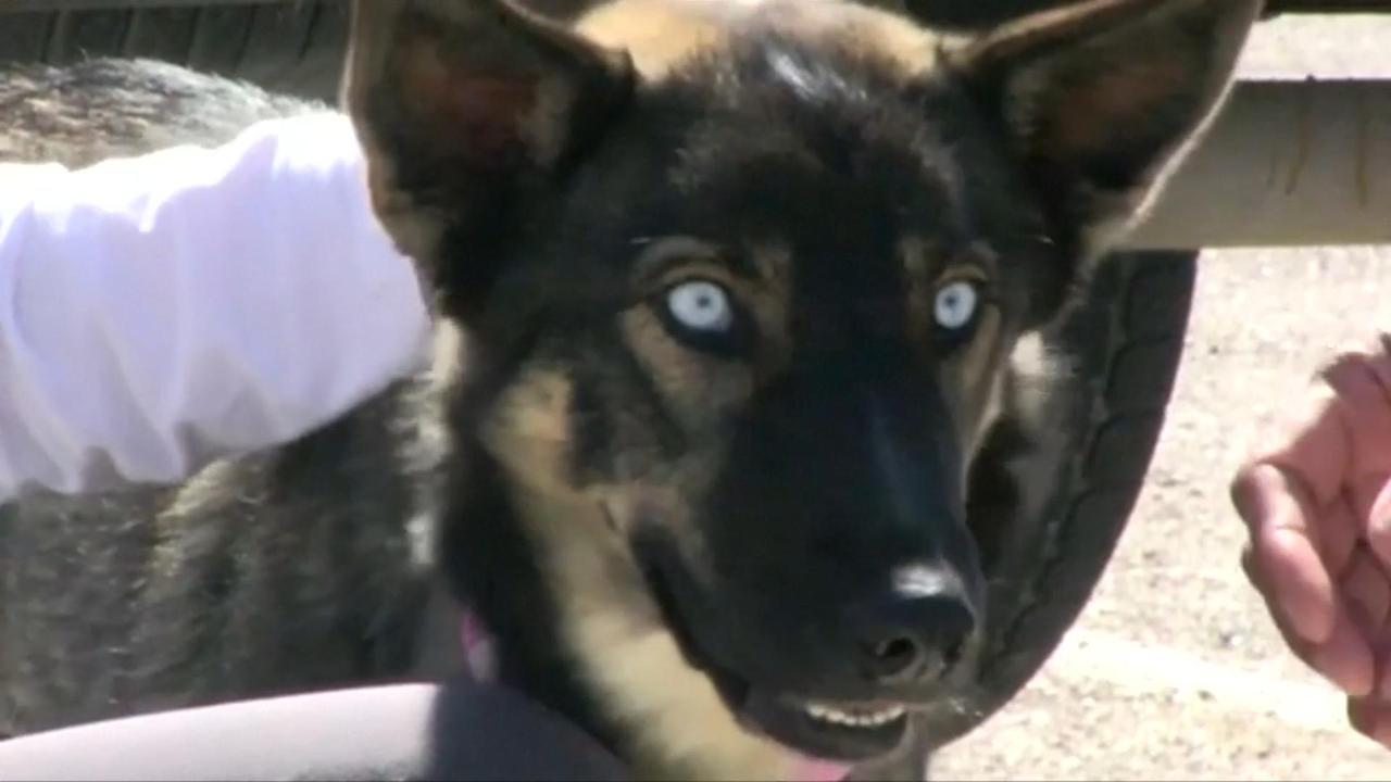 Over boord geslagen hond na vijf weken terecht