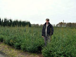 Markt kerstbomen grotendeels gebouwd op tradities