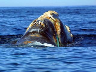 Individuen mogelijk onderwater te volgen met behulp van geluidsanalyse