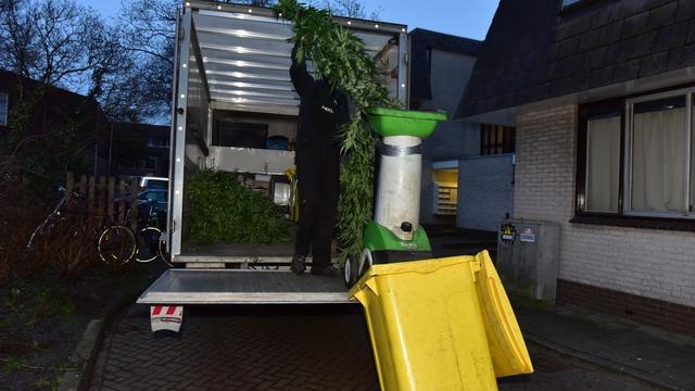 Hennepkwekerij met 250 planten ontdekt in Merenwijk