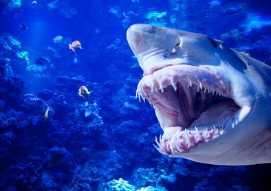 Recordaanvallen haaien Fotoserie