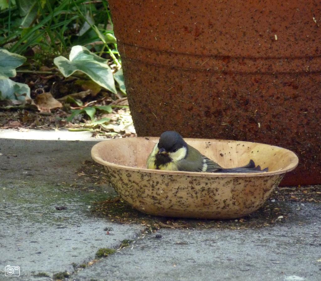 Koolmeesje neemt een bad in breda foto 210814 de laatste nieuwsfoto 39 s zie je het - Foto in een bad ...