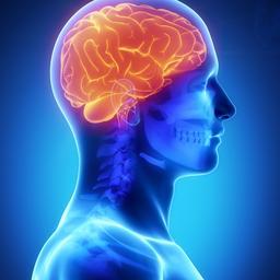 visuele-hersengebieden-verwerken-ook-gel