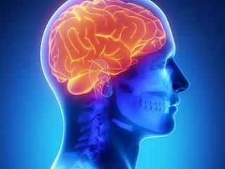 Brein van sommige mensen beter geschikt voor leren nieuwe taal