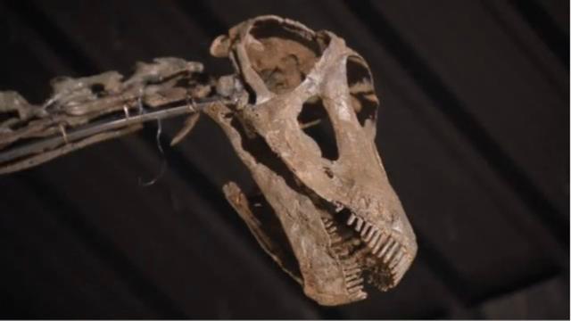 Indeling van dinosauriërs in families moet na 130 jaar veranderen