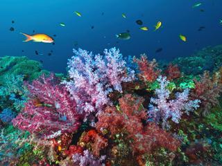 Klimaatgeschiedenis gereconstrueerd met behulp van koraal en ijs