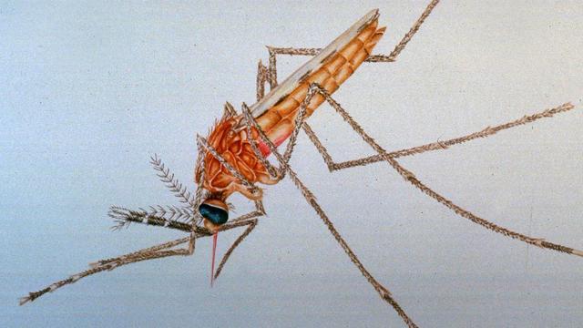Wageningse muggenval met mensengeur kan malaria uitroeien