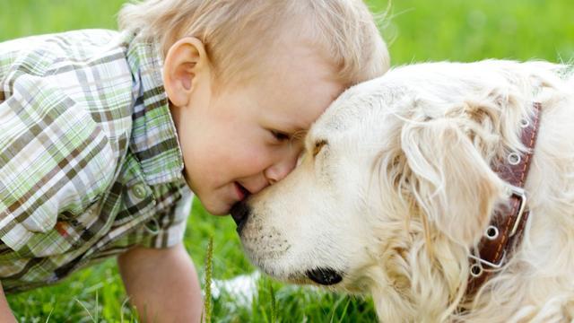 Honden herkennen emoties op gezichten beter dan gedacht