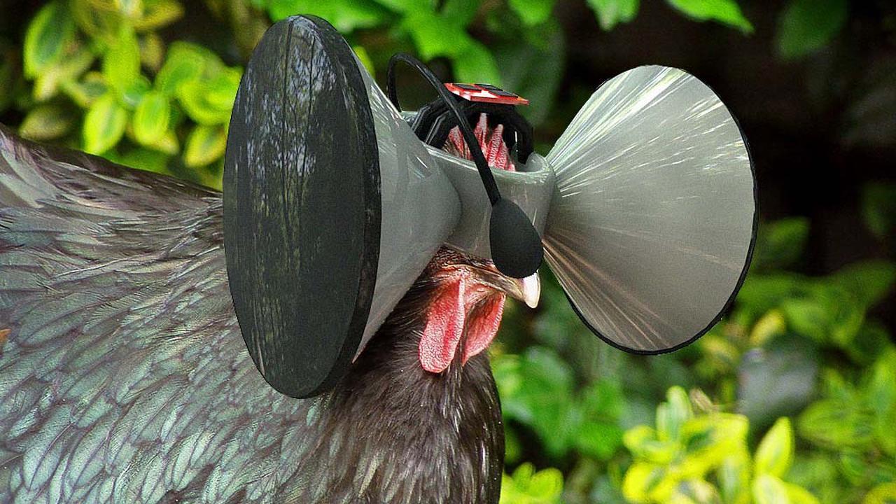Virtual reality bril voor kippen geeft idee van meer ruimte nu het laatste nieuws het eerst - Ruimte van het meisje verf idee ...