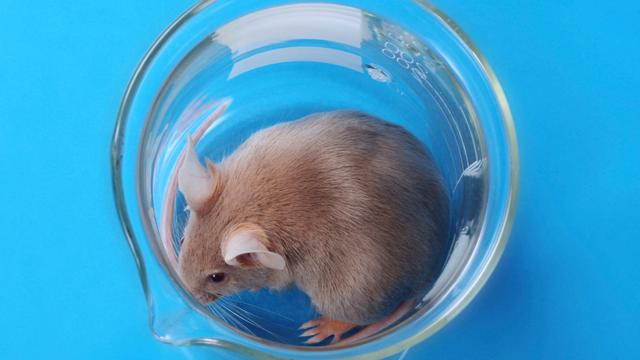 Muizen kunnen ziek worden van kunstmatig licht