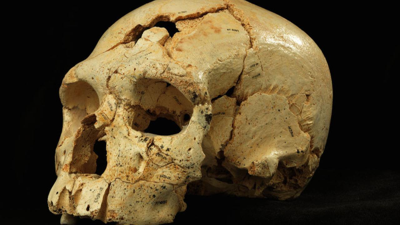 Ava overleed 3700 jaar geleden, nu weten we hoe ze eruitzag