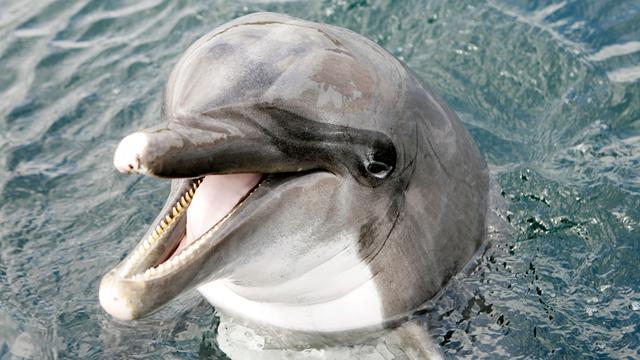 Dolfinarium brengt aantal dolfijnen omlaag